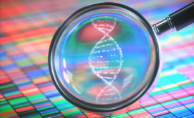 magnifying dna