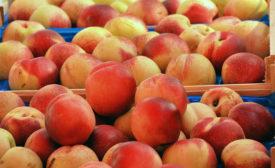 peaches generic picture