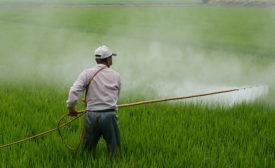 worker spraying pesticides in field