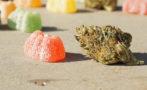 gummies and THC/cannabis