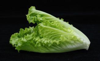romaine lettuce, black background