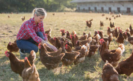 Woman Petting Flock of Chickens