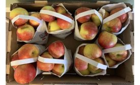 North Bay Produce Voluntarily Recalls Fresh Apples Because of Possible Health Risk