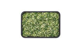 Wegmans Issues Voluntary Recall of Fresh Cauliflower Rice, Veggie/Cauliflower Rice Blend and Stir-Fry Mix with Cauliflower