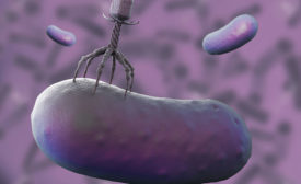 Bacteriophages targeting bacteria