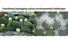 Broccoli in Xtend Iceless packaging