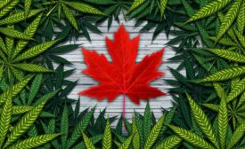 Canadian Maple Leaf and Pot Leaves