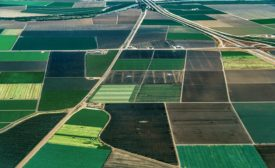 tracking produce
