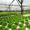 produce farm