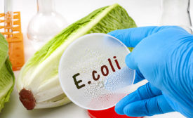 2020 Food Safety Report E-Coli