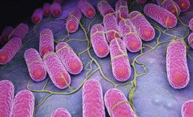 microscopic view of pathogens