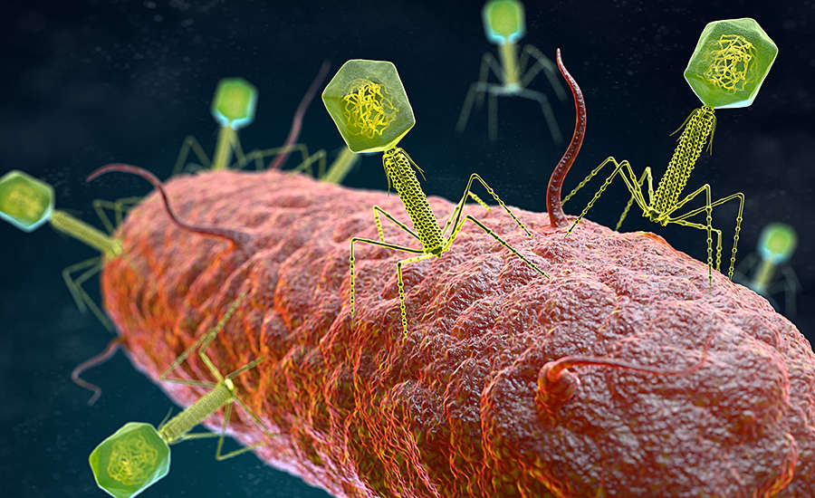 closeup of a germ