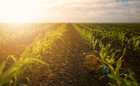 sustainability farm