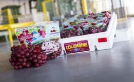 grape packaging
