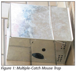 Multiple-Catch Mouse Trap