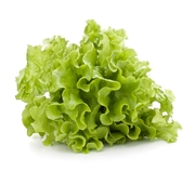 138 Illnesses Caused by Salinas-Grown Romaine Lettuce; One Common Grower Identified But Still Unnamed