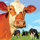 Antibiotic Use in Food Animals: A Growing Threat to Public Health