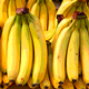 The Challenges of Banana Production: Pathogens, Breeding, and Sustainability