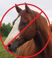 No News Is Good News in European Horse Meat Tests