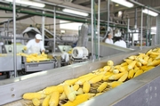 Sanitary Design's Role in Fresh Produce Processing to Prevent Listeria Contamination