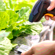 Traceability Progress in the Leafy Greens Sector