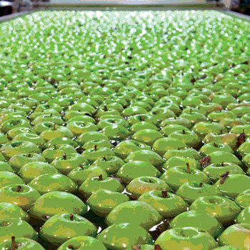Food Plant SOPs: The Backbone of Your Food Safety System