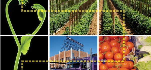 Produce Traceability and Trace-back: From Seed to Shelf and Beyond