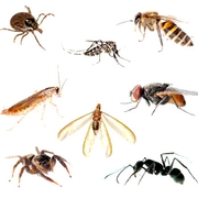 Pest Management: Inside and Out