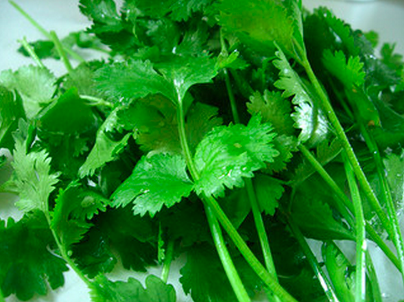 cilantro-flickr.png