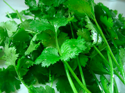 Cilantro From U.S. and Mexico Test Positive for Cyclospora Parasite