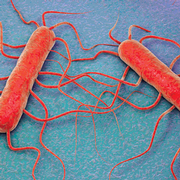 Keys to Effective Monitoring for Listeria