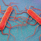 Keys to Effective Monitoring for <i>Listeria</i>