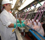 USDA Announces New Inspection System for Poultry Products