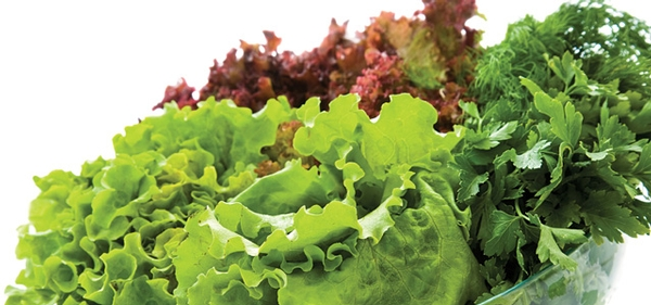California Leafy Greens Marketing Agreement Emerges as a Model Program  for Food Safety