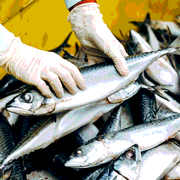 An Example of Seafood Safety Capacity Building in Developing Countries