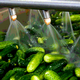 High-Pressure Processing – Keeping Foods Fresh, Healthy, and Safer