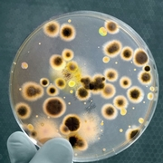Antibiotic Resistance: A Food Safety Issue
