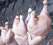 Researchers Aim to Reduce Pathogen Loads on Poultry Carcasses