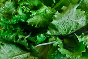 U.S. Declares End to Leafy Green E. coli Outbreak