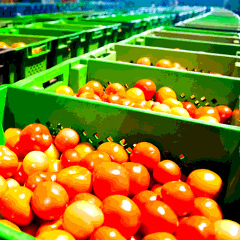 The Produce Safety Rule: Be Prepared for a Food Regulatory