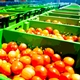 The Produce Safety Rule: Be Prepared for a Food Regulatory Inspection