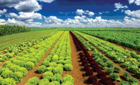 LettuceFarm.jpg