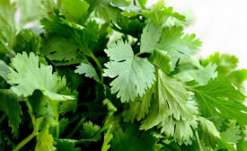 English Outbreak of Shigella in 2018 Likely Caused by Contaminated Coriander