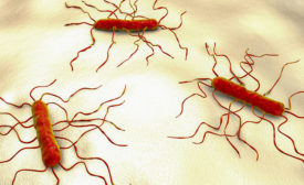 AFFI Launches Listeria Control Specialist Certificate Program for Food Safety Management