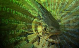 Fish data