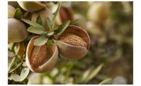 Almond Board Receives Prestigious Award in Recognition of Outstanding Contributions to Food Safety